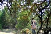 Kaçak ağaç keserken teknolojik göze yakalandı