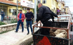 Ölen 6 kuzusunu, İlçe Tarım Müdürlüğü önüne bıraktı